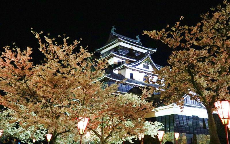 松江城の夜桜
