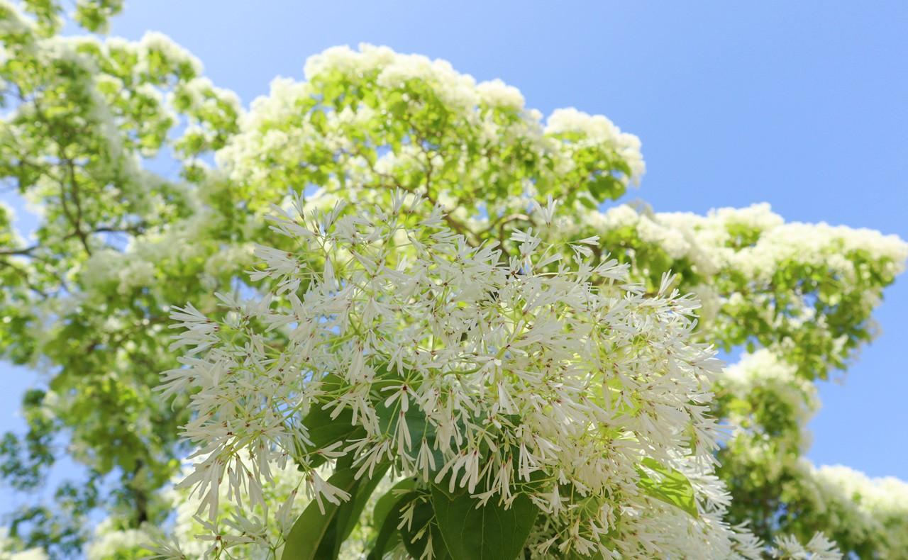 青空に映える花びら